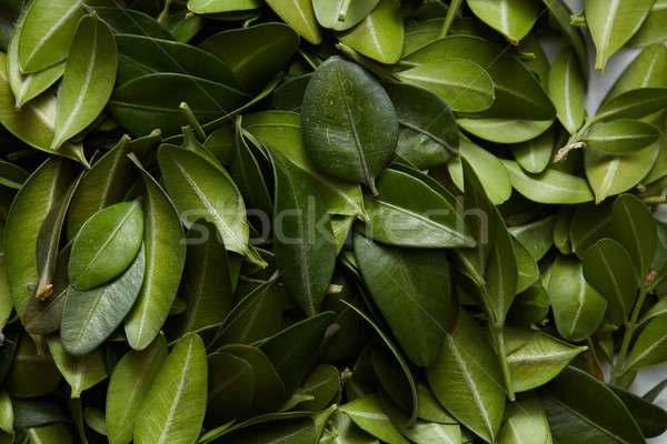 Stock photo: Pattern of green leaves
