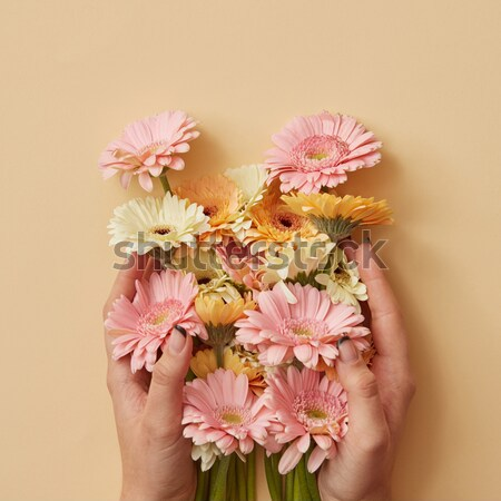 Hands of a woman with a tattoo hold a beautiful bouquet with pink gerberas on an orange background Stock photo © artjazz