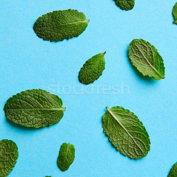 緑 ミント 葉 異なる 青 パターン ストックフォト © artjazz
