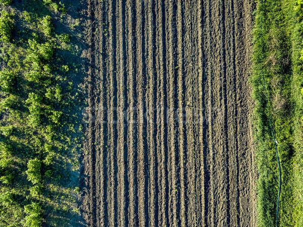 Aerial view planting young trees with irrigation system. Photo from the drone Stock photo © artjazz