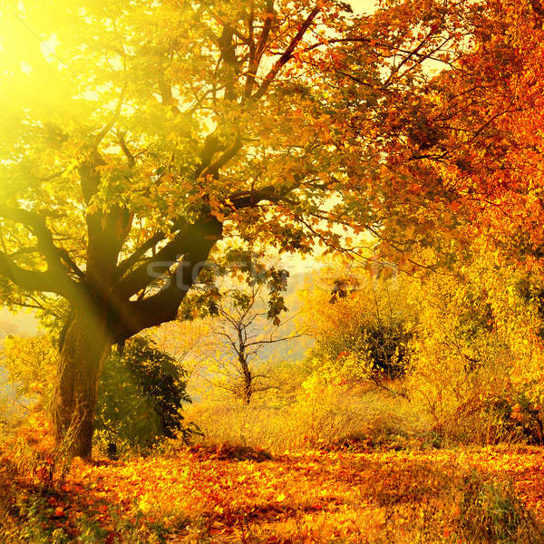 autumn forest with sun beam Stock photo © artjazz