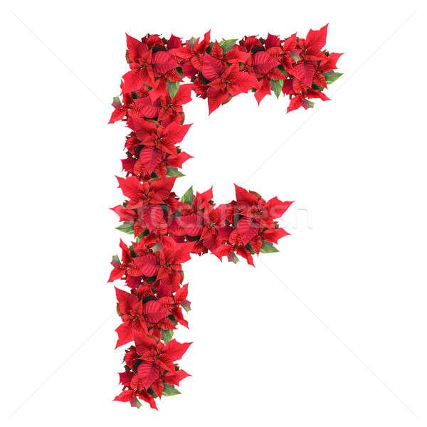 List czerwony christmas kwiaty odizolowany biały Zdjęcia stock © artjazz