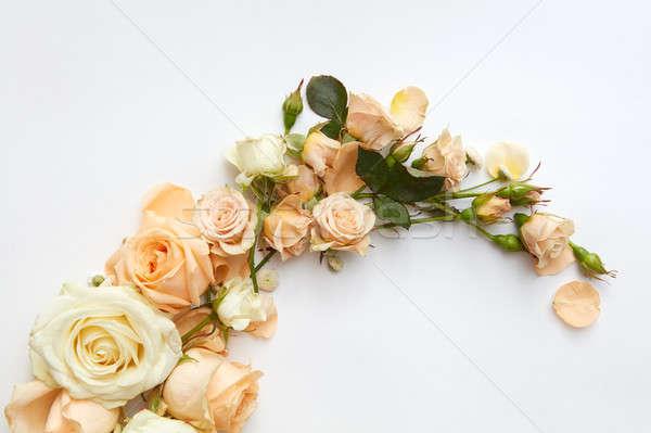 Güller beyaz güzel farklı renkler güzel Stok fotoğraf © artjazz