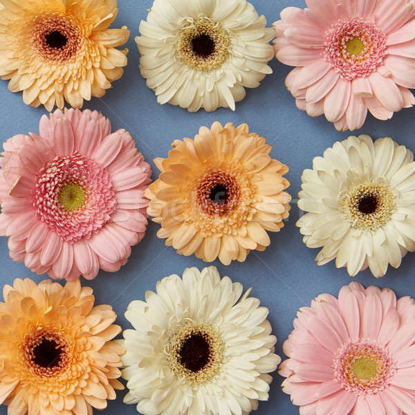 Wzór biały różowy pomarańczowy niebieski papieru Zdjęcia stock © artjazz