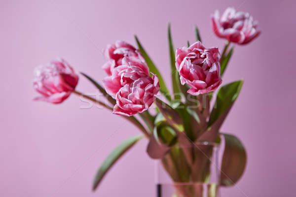 Bouquet tulipes verre vase rose transparent Photo stock © artjazz