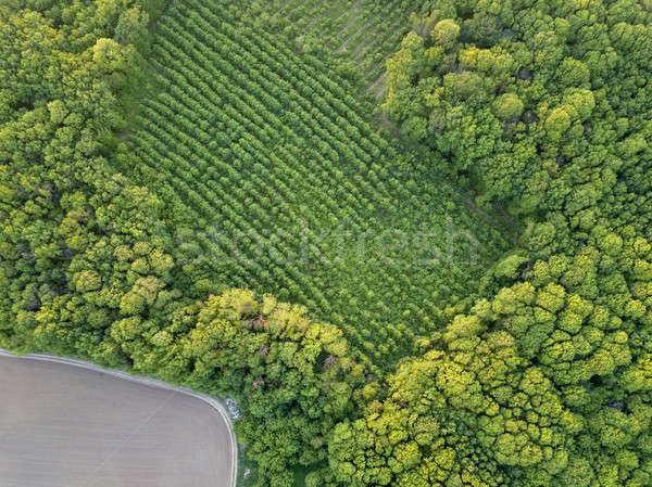 Aerial view from the drone, a bird's eye view to the forest with green spaces and agricultural field Stock photo © artjazz