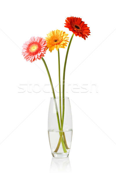 Bouquet verre vase isolé blanche eau Photo stock © artjazz
