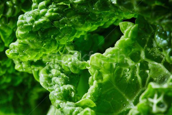 Lahana doku yeşil yaprak gıda yaprak bahçe Stok fotoğraf © artjazz