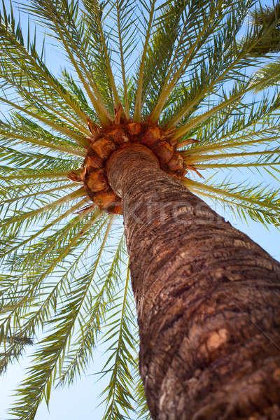 Cocotier arbres Palm ciel bleu tropicales Photo stock © artjazz