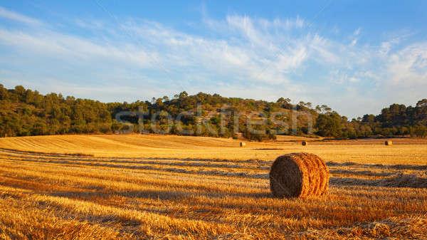 Stack of hay Stock photo © artjazz