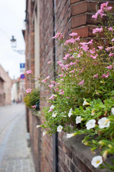 Balcony with flowers Stock photo © artjazz
