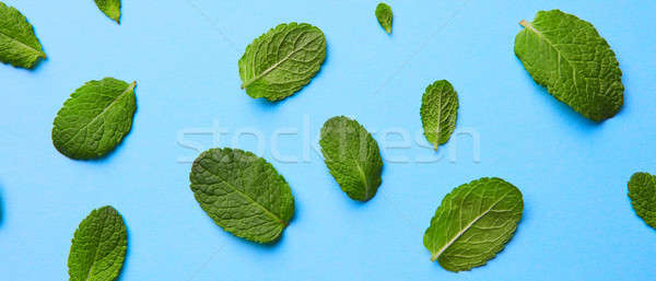 Сток-фото: шаблон · свежие · зеленый · мята · листьев · синий