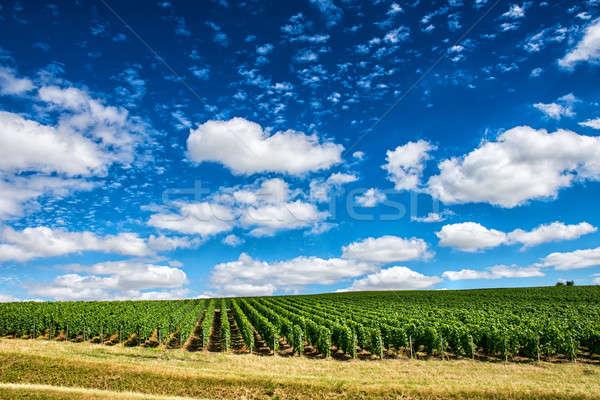 виноградник пейзаж Франция небе облака солнце Сток-фото © artjazz