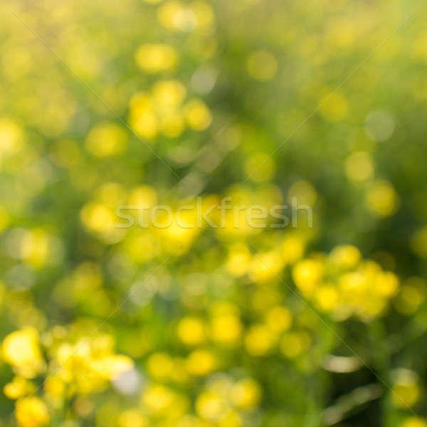 ストックフォト: 花 · 自然 · ぼけ味 · 抽象的な · 森林 · 美