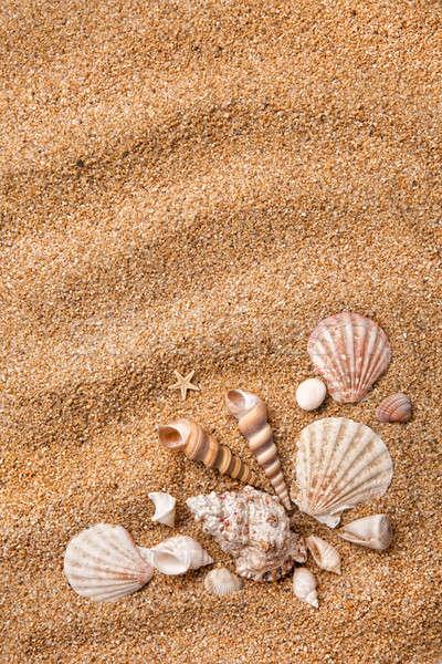Keret különböző kagylók homok víz természet Stock fotó © artjazz