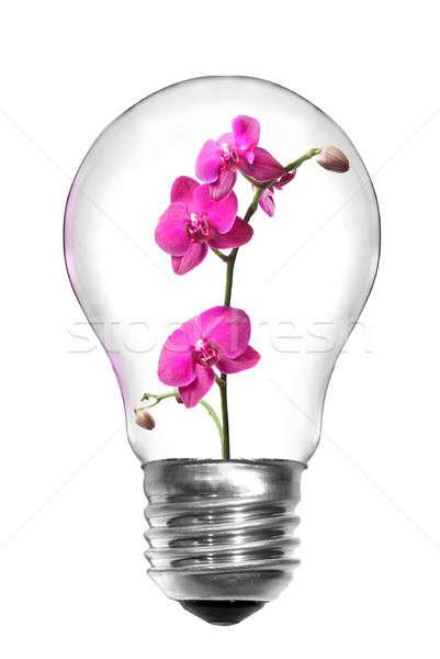 Naturalnych energii żarówka różowy Orchidea odizolowany Zdjęcia stock © artjazz