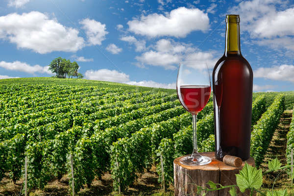 Glass and bottle of red wine against vineyard landscape Stock photo © artjazz