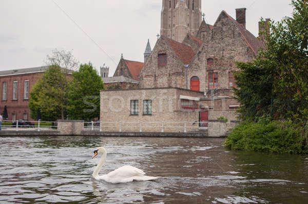 łabędź jezioro domu budynku ulicy lata Zdjęcia stock © artjazz
