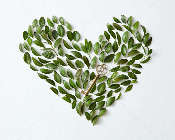 Leaves in heart shape Stock photo © artjazz