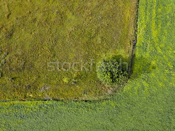 Panoramic view from flying drones to agricultural fields with dirty trail and green bush. Top view. Stock photo © artjazz