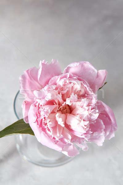 Taze pembe çiçek cam vazo gri üst Stok fotoğraf © artjazz