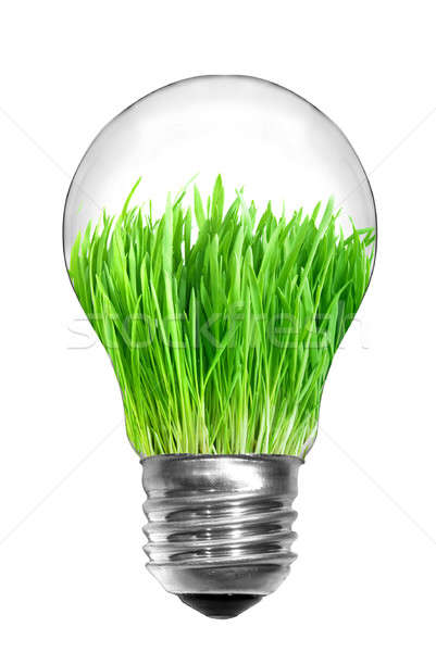 Természetes energia villanykörte zöld fű bent izolált Stock fotó © artjazz