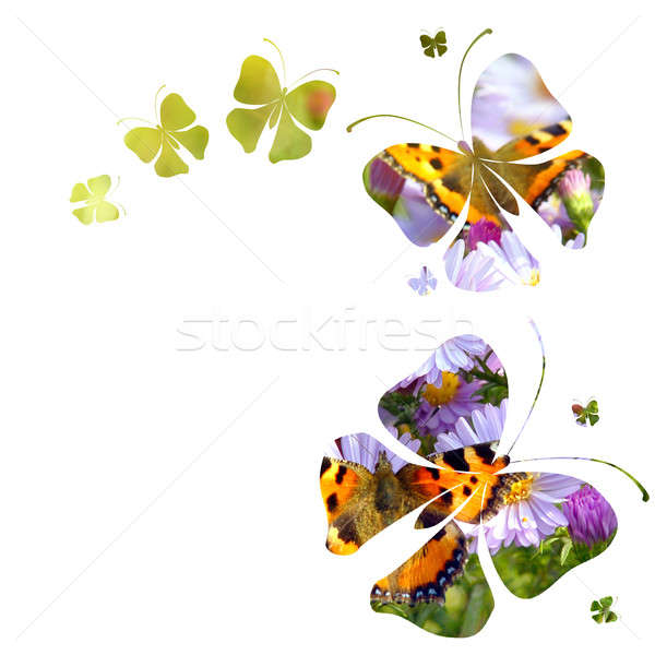 Papillons blanche printemps nature design feuille Photo stock © artjazz