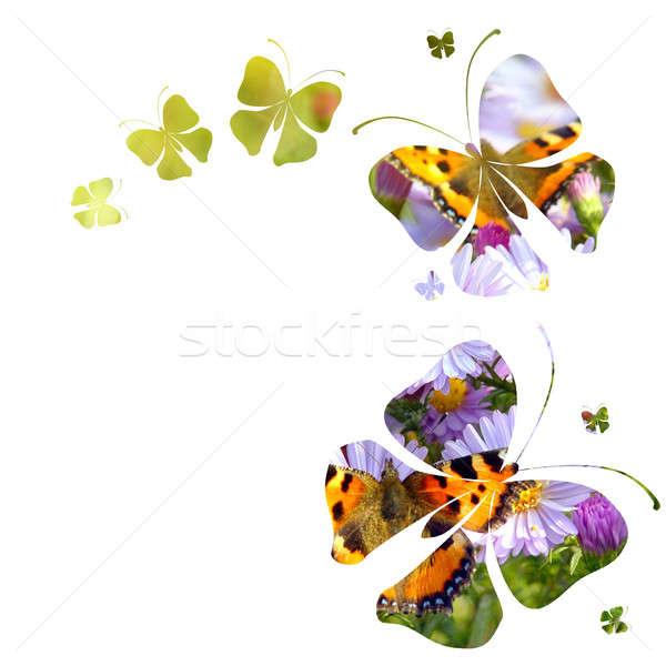 Vlinders witte voorjaar natuur ontwerp blad Stockfoto © artjazz