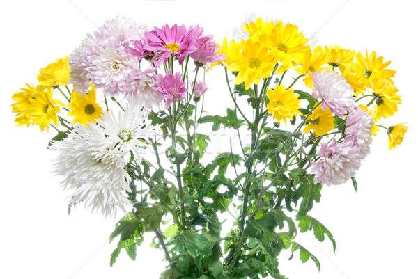 菊 花束 孤立した 白 イースター 花 ストックフォト © artjazz