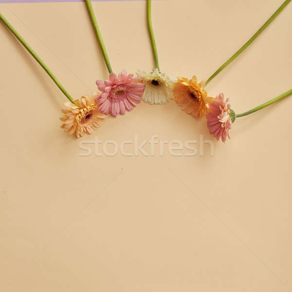 Keret különböző virágok bézs kreatív posta Stock fotó © artjazz
