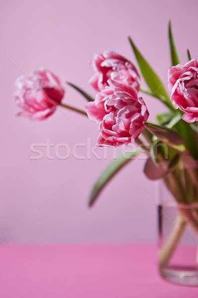 ピンク チューリップ ガラス 花瓶 明るい 花束 ストックフォト © artjazz