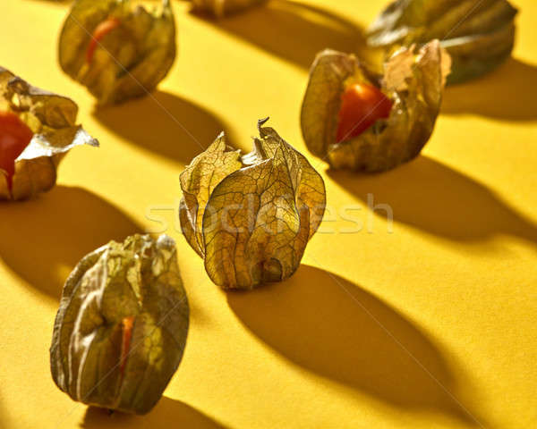 Close-up view of yellow ripe, juicy physalis fruit with shadows on a yellow background, soft focus. Stock photo © artjazz