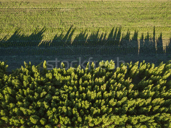 Aerial view countryside green field and forest on a sunny day Stock photo © artjazz
