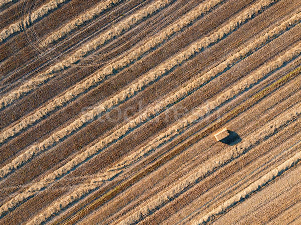 Top view from flying drones to an agricultural field after harvesting wheat with a straw stack on it Stock photo © artjazz