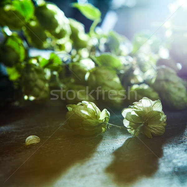 green hop branch on wooden background. Stock photo © artjazz