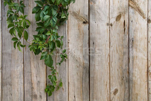 wooden wall with green leaves Stock photo © artjazz