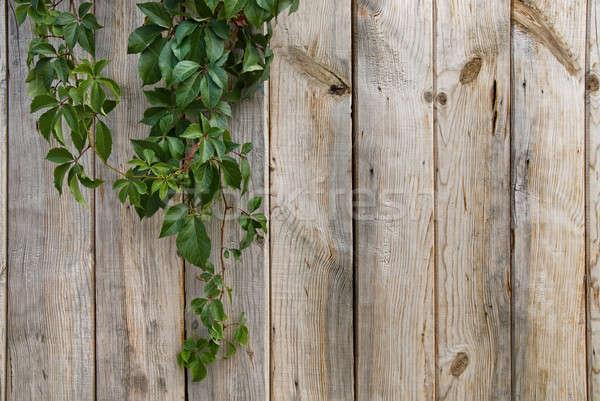 Fából készült fal zöld levelek textúra fa absztrakt Stock fotó © artjazz