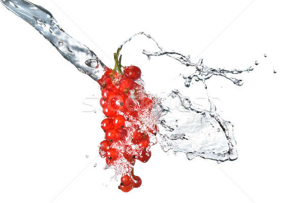 redcurrant and water drops isolated on white Stock photo © artjazz