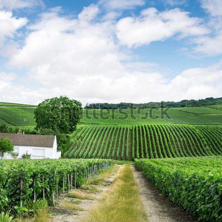 Szőlőskert tájkép Franciaország ház égbolt étel Stock fotó © artjazz