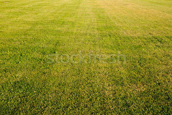 green cutted grass background Stock photo © artjazz