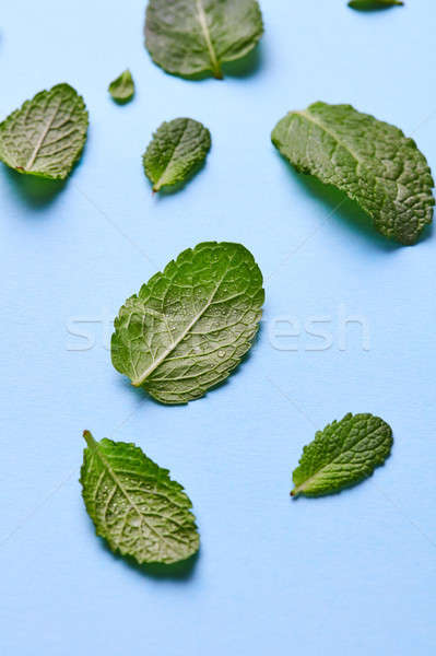 Muster Blätter grünen mint blau frischen Stock foto © artjazz