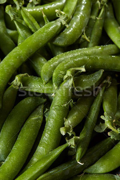 Freshly picked green sticks of peas close-up with droplets of water. Stock photo © artjazz