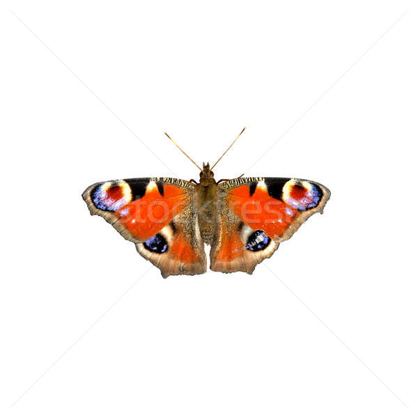 butterfly isolated on white Stock photo © artjazz