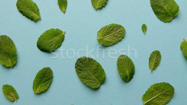 шаблон зеленый мята листьев синий Creative Сток-фото © artjazz