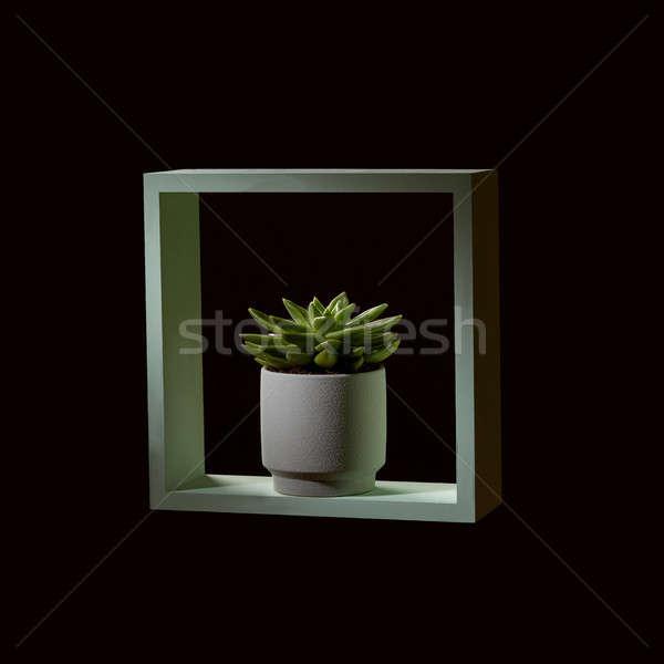 белый цветочный горшок зеленый кадр темно Сток-фото © artjazz