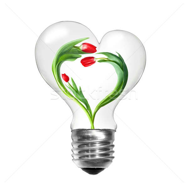 Natural energy concept. Light bulb with tulips with shape of heart isolated on white Stock photo © artjazz