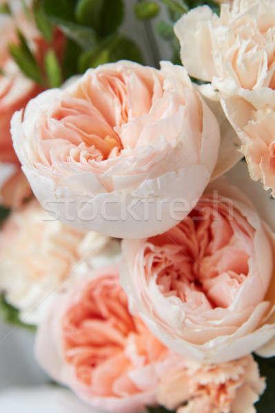 Pastel rosa rosas suave textura primavera Foto stock © artjazz