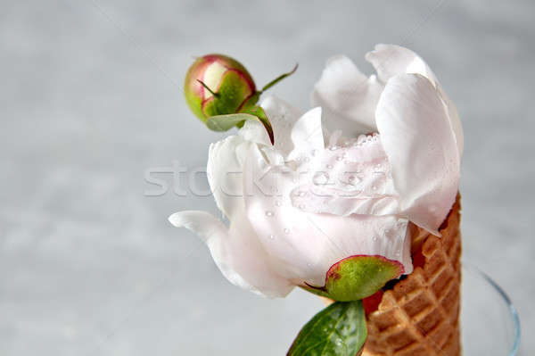 Nice bud Wassertropfen Wafer Kegel Stock foto © artjazz