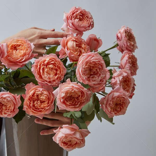 Femminile mani tenere vaso rosa rose Foto d'archivio © artjazz
