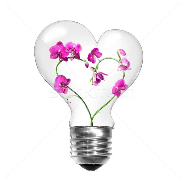 Natural energy concept. Light bulb with orchids in shape of heart isolated on white Stock photo © artjazz